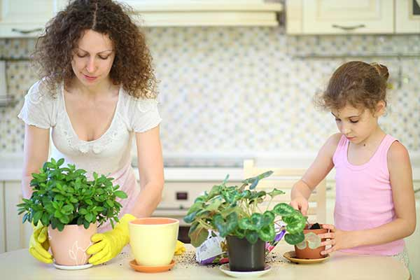 mother and daughter transplant plants in kitchen