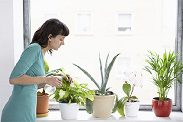 woman sprays plants in flowerpots by window