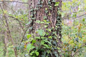 Ivasive plants