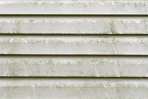 close-up of mold on white siding