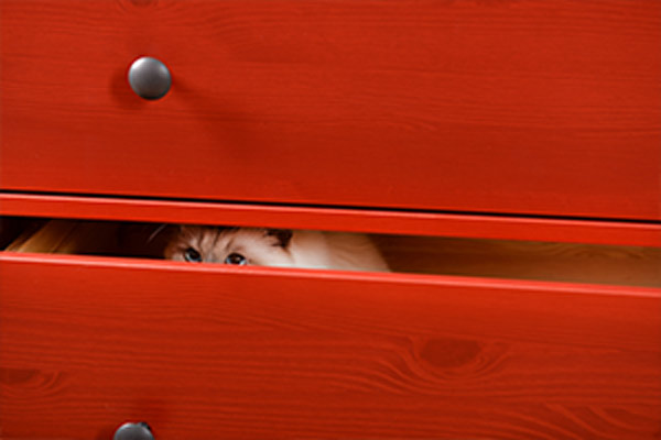 cat hiding in red dresser drawer