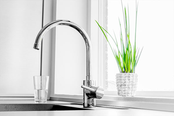 chrome kitchen sink faucet in modern kitchen with green plant