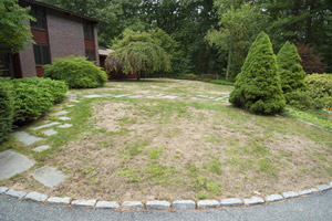 lawn in front yard with large brown patches