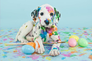 photo easter dalmatian puppy