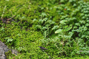 small plants growing in moss
