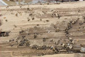 termite damage rotten wood