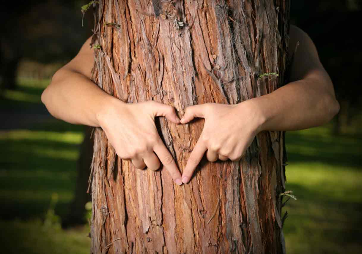 tree nature s gift to man Trees - nature's gift to man plant a tree this christmas how irrational would it be to kill a tree, even if we reason out that we need its wood,.