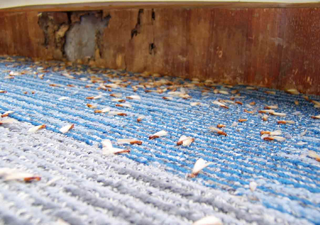 Unseen Termite Damage in Your Home | Best Pick Reports