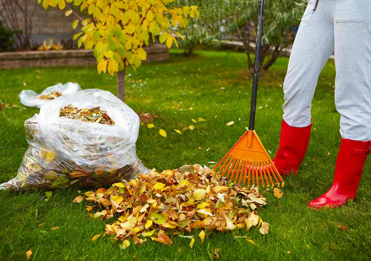 5 Ways to Use Fallen Leaves [Infographic]   Best Pick Reports
