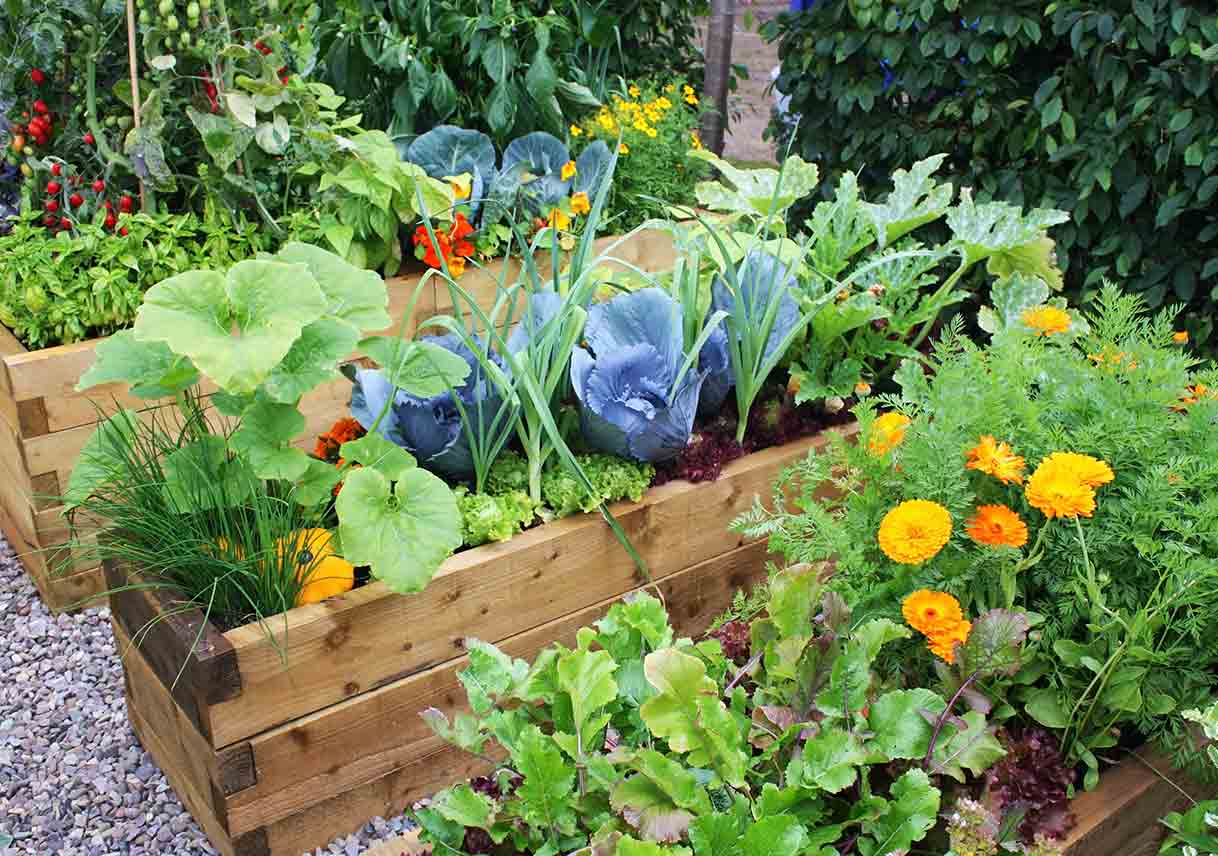 Edible Landscaping For Beginners Best Pick Reports
