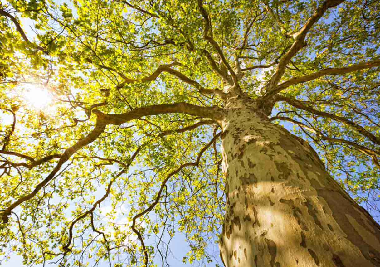 Provide The Right Care For Every Part Of Your Tree Best