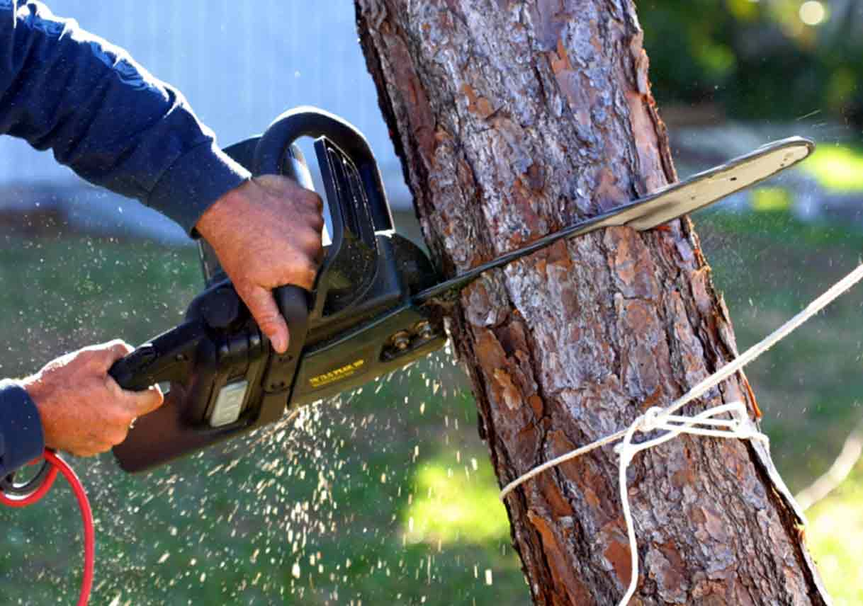 Superior Tree Removal Tips: Five Things To Keep In Mind