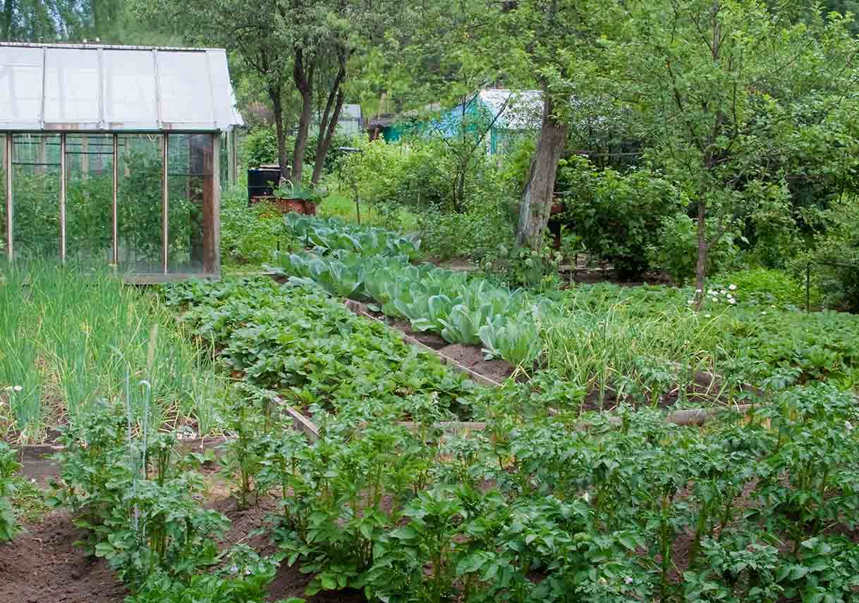 gardening to feed your family year-round | best pick reports