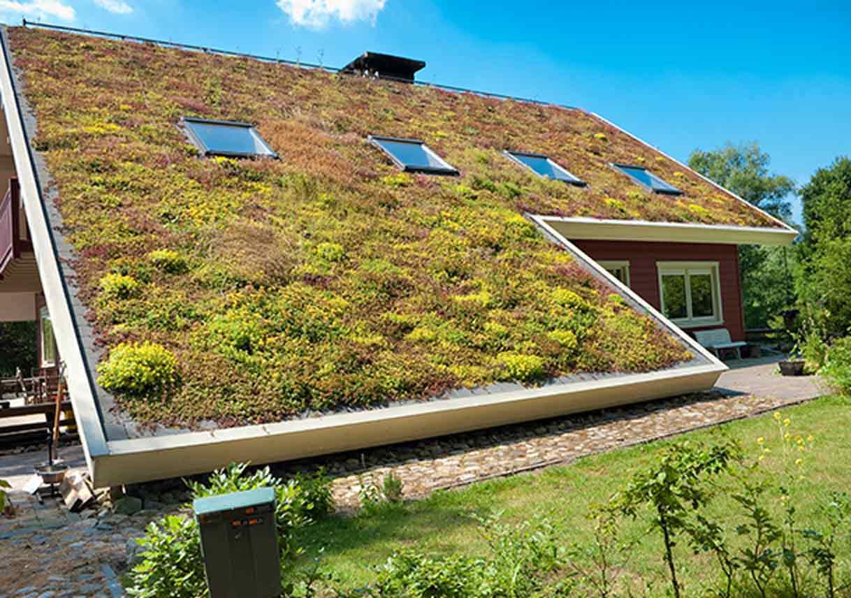 Secrets To A Flourishing Eco Roof Best Pick Reports