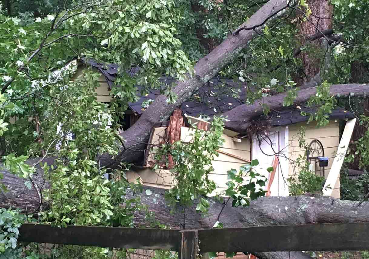 A Tree Limb Fell On My Neighbor S Shed Best Pick Reports
